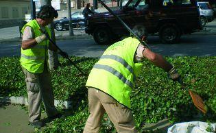 El Ayuntamiento dio trabajo a 431 personas en el 2015 en planes de empleo
